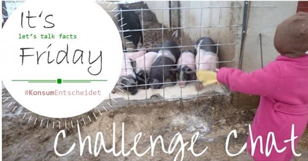 Challenge Chat - Titelbild 3_Schweine