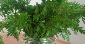 Karottengrün