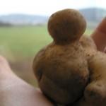 die potatoes