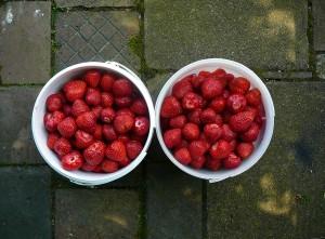 erdbeer eimer