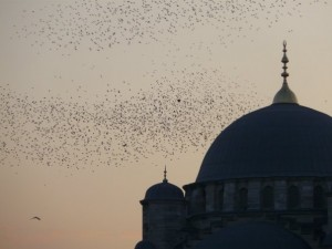 ireni in istanbul